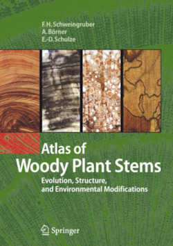 Atlas of Woody Plant Stems - Schweingruber, Fritz Hans / B