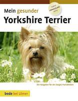 Mein gesunder Yorkshire Terrier